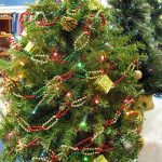 A close up of a small Christmas tree for sale at St. Vincent de Paul's Fond du Lac.